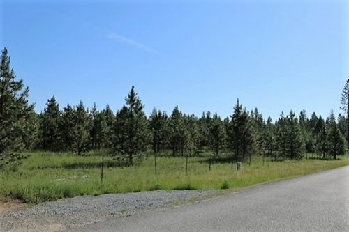 Land for Sale - Silver Birch Orchards Oldtown, ID 83822