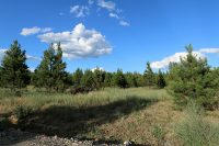 4- Silver Birch Orchards Oldtown, ID 83822